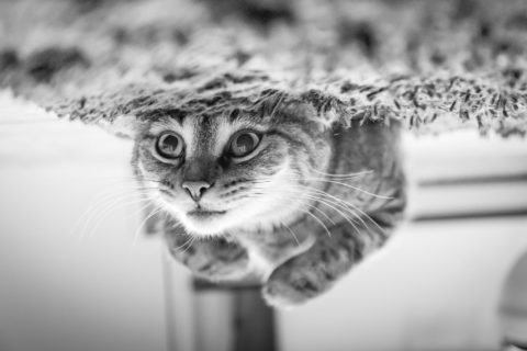 Black and white image of a cute cat