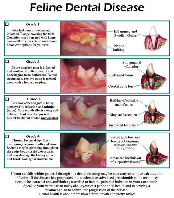 Chart showing stages of Feline dental disease.